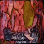 Madrona Bark #2-Paulette Cornish-Fibre Art-Surface Design-Digital Art-Photgraphy