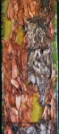 Madrona Bark #5-Paulette Cornish-Fibre Art-Surface Design-Digital Art