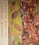 Madrona Bark & Leaves -Paulette Cornish-Fibre Art-Surface Design-Digital Art -Natural Dyeing